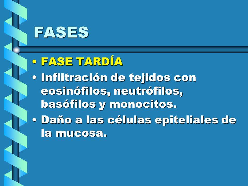 FASES FASE TARDÍA. Inflitración de tejidos con eosinófilos, neutrófilos, basófilos y monocitos.