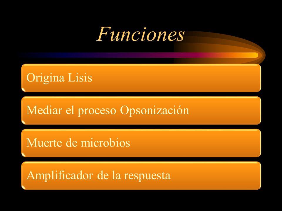 Funciones Mediar el proceso Opsonización Amplificador de la respuesta