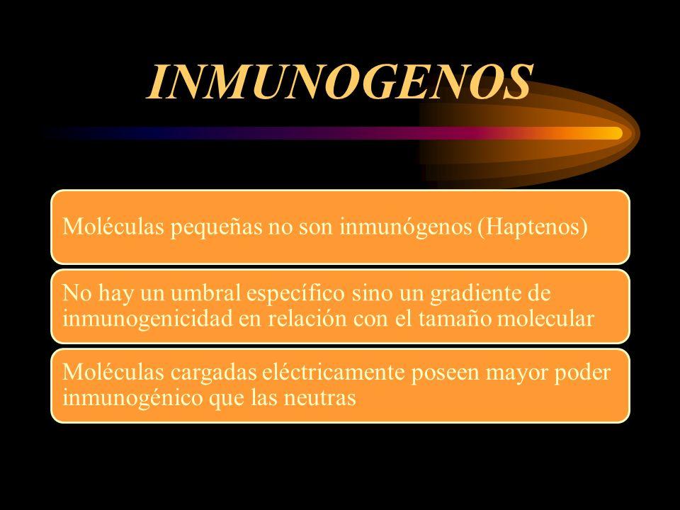INMUNOGENOS Moléculas pequeñas no son inmunógenos (Haptenos)