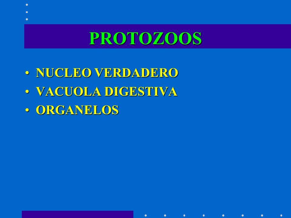 PROTOZOOS NUCLEO VERDADERO VACUOLA DIGESTIVA ORGANELOS
