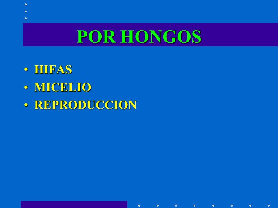 POR HONGOS HIFAS MICELIO REPRODUCCION