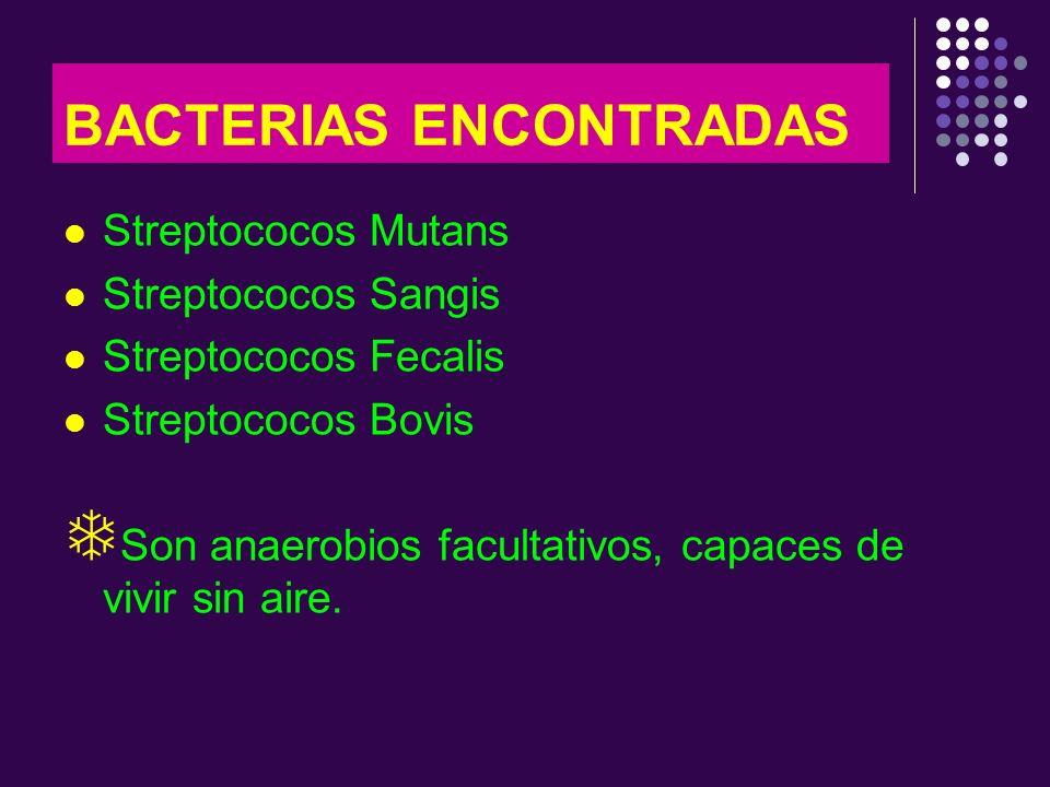 BACTERIAS ENCONTRADAS