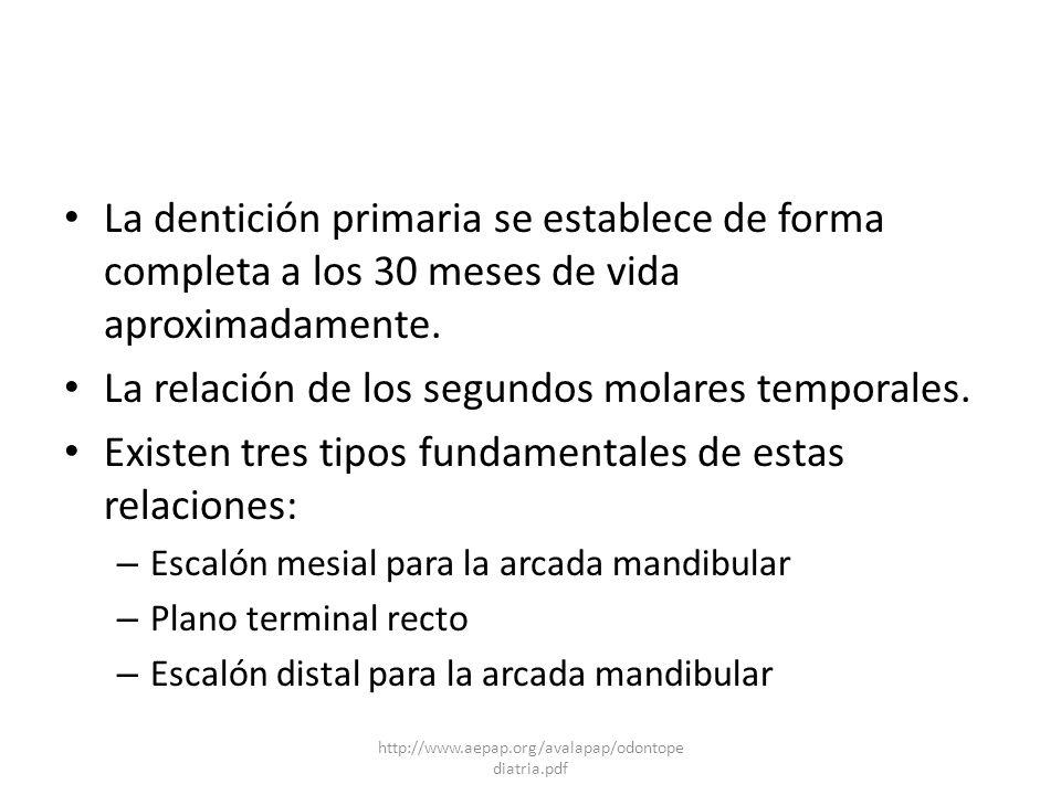 La relación de los segundos molares temporales.