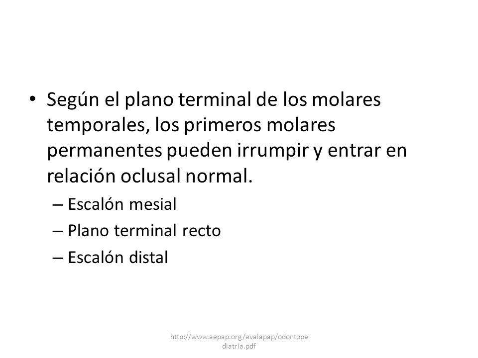 Según el plano terminal de los molares temporales, los primeros molares permanentes pueden irrumpir y entrar en relación oclusal normal.