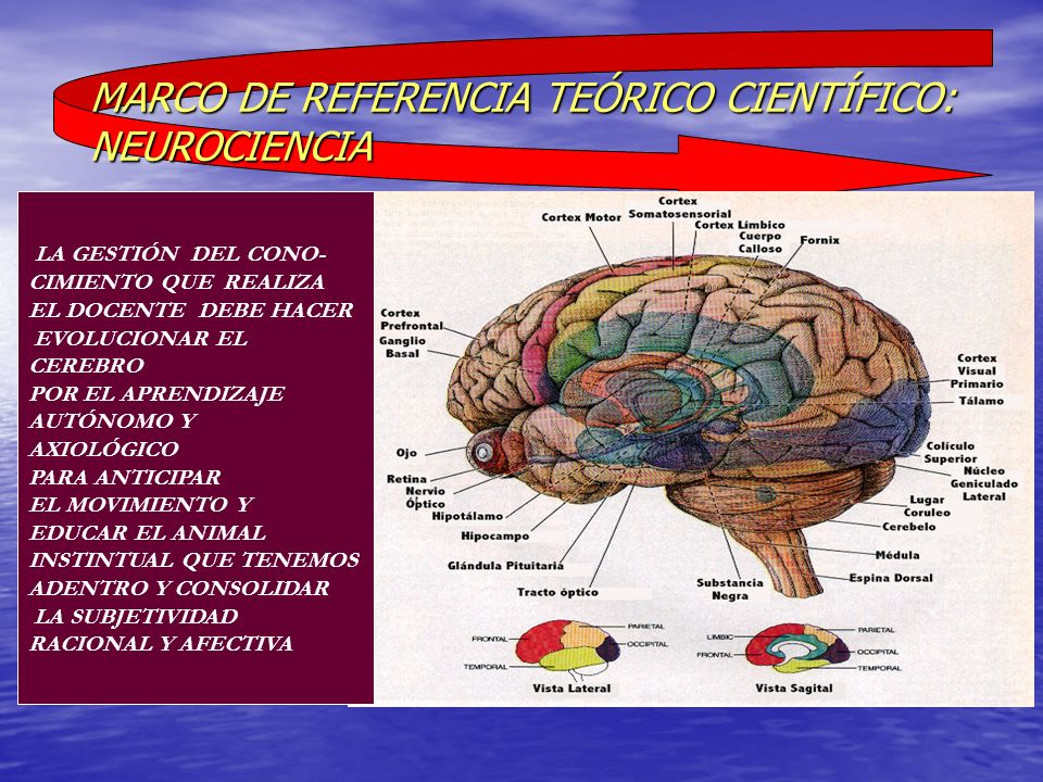 MARCO DE REFERENCIA TEÓRICO CIENTÍFICO: NEUROCIENCIA