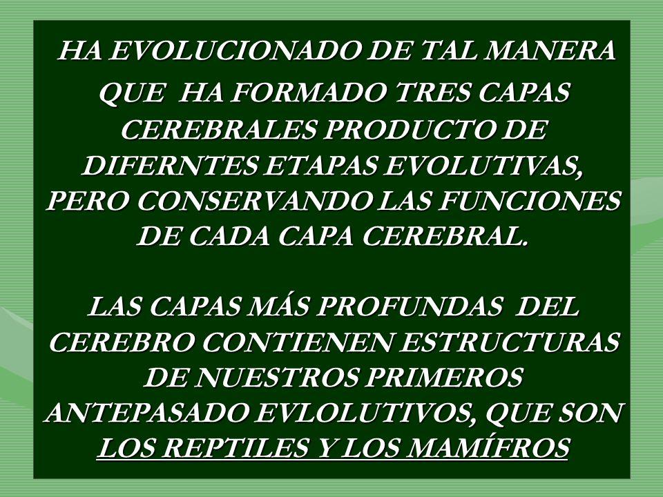 HA EVOLUCIONADO DE TAL MANERA QUE HA FORMADO TRES CAPAS CEREBRALES PRODUCTO DE DIFERNTES ETAPAS EVOLUTIVAS, PERO CONSERVANDO LAS FUNCIONES DE CADA CAPA CEREBRAL.
