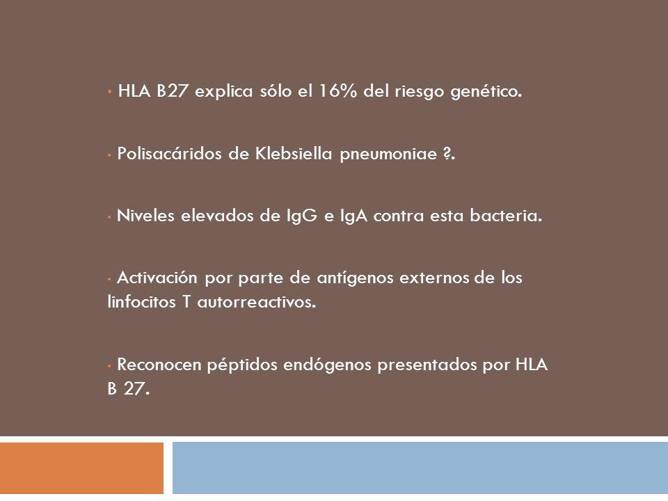 HLA B27 explica sólo el 16% del riesgo genético.
