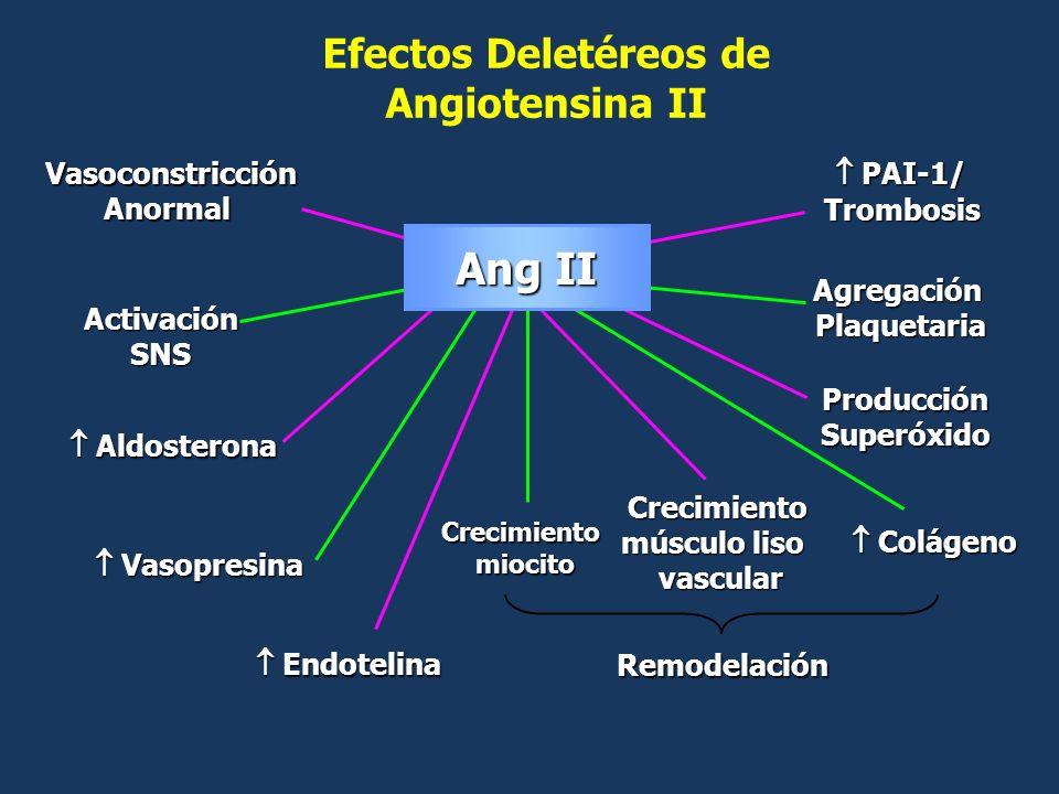Ang II Efectos Deletéreos de Angiotensina II Vasoconstricción Anormal
