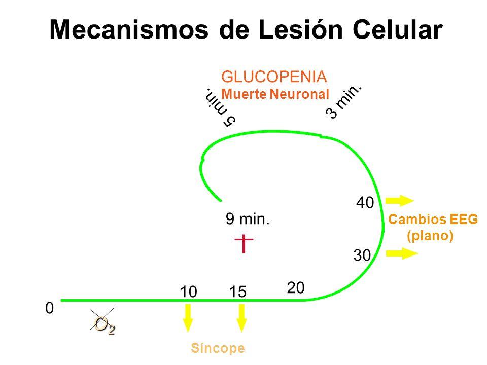 Mecanismos de Lesión Celular