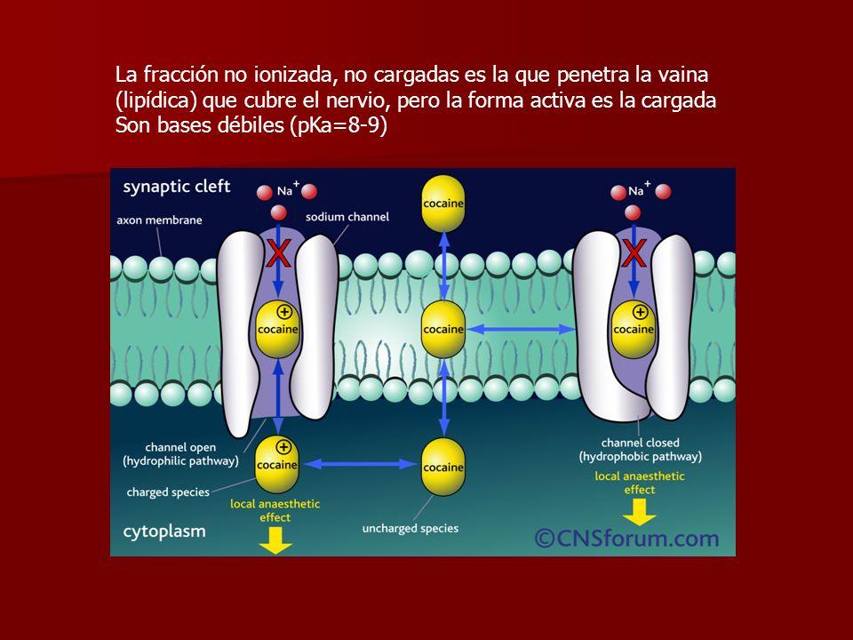 La fracción no ionizada, no cargadas es la que penetra la vaina (lipídica) que cubre el nervio, pero la forma activa es la cargada