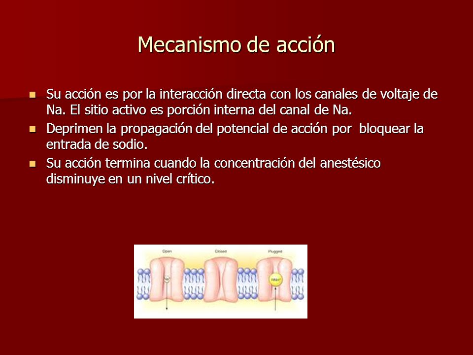 Mecanismo de acción Su acción es por la interacción directa con los canales de voltaje de Na. El sitio activo es porción interna del canal de Na.