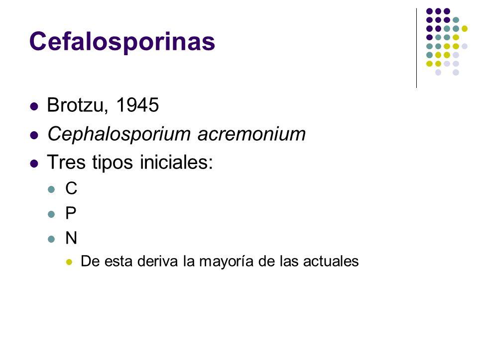 Cefalosporinas Brotzu, 1945 Cephalosporium acremonium