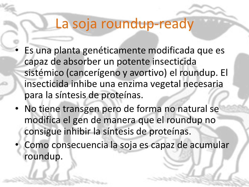 La soja roundup-ready
