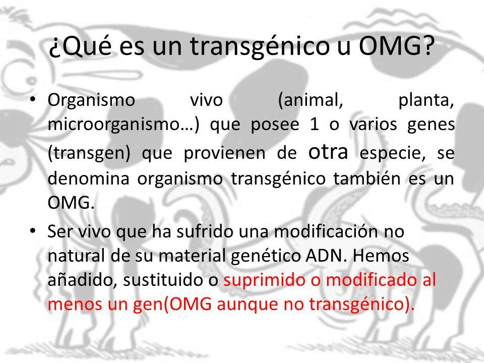 ¿Qué es un transgénico u OMG
