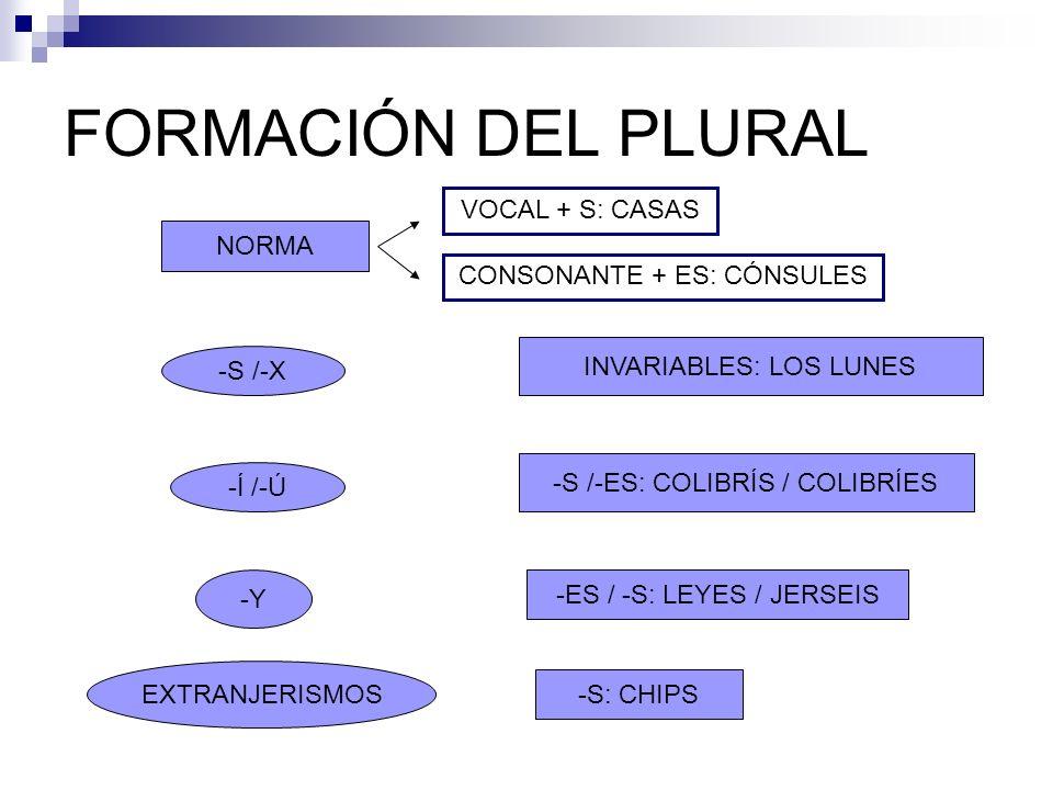 FORMACIÓN DEL PLURAL VOCAL + S: CASAS NORMA CONSONANTE + ES: CÓNSULES
