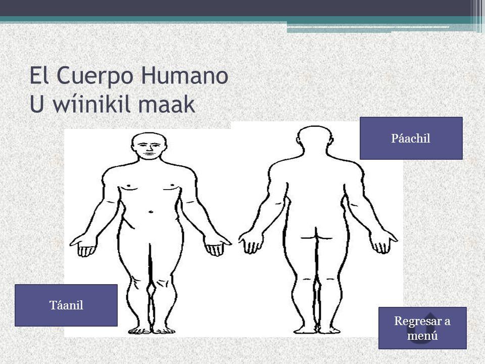 El Cuerpo Humano U wíinikil maak