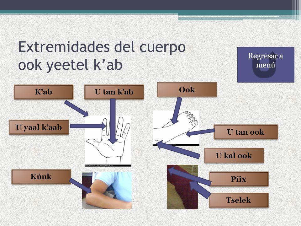 Extremidades del cuerpo ook yeetel k'ab