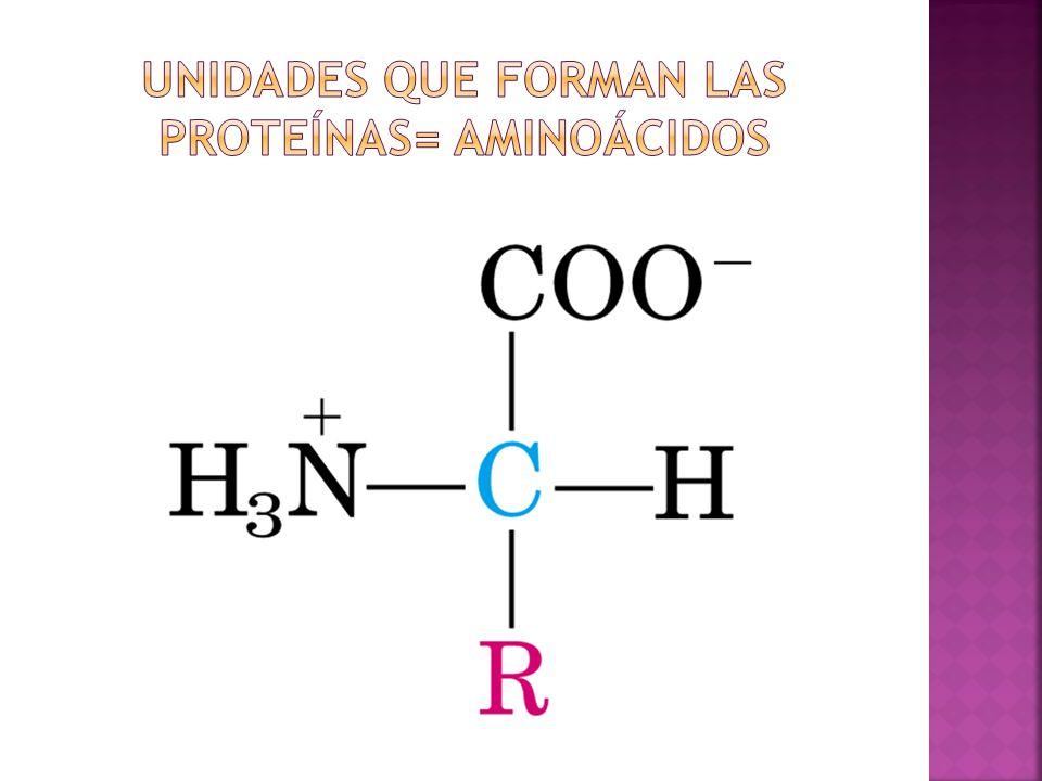 Unidades que forman las proteínas= aminoácidos