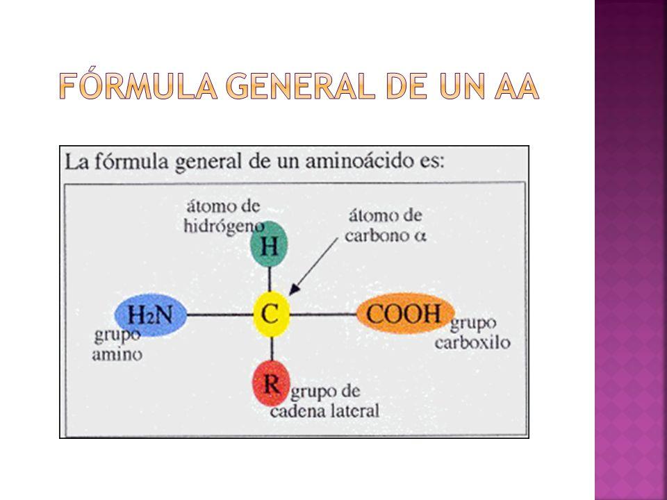 Fórmula general de un aa