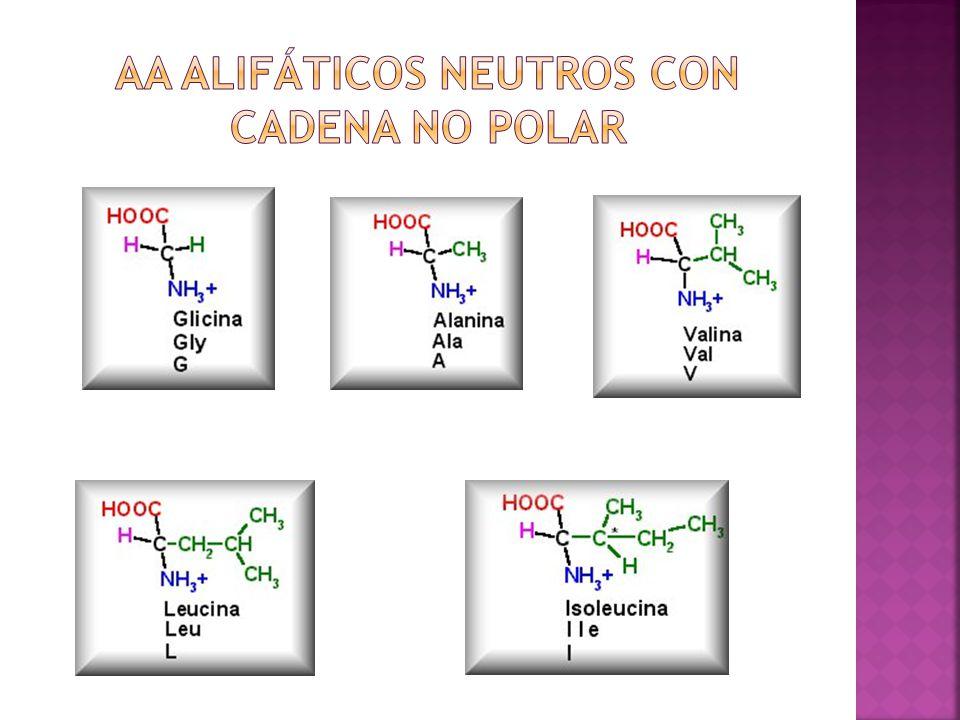 AA Alifáticos neutros con cadena no polar