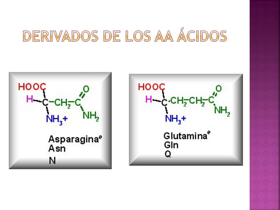 Derivados de los aa ácidos
