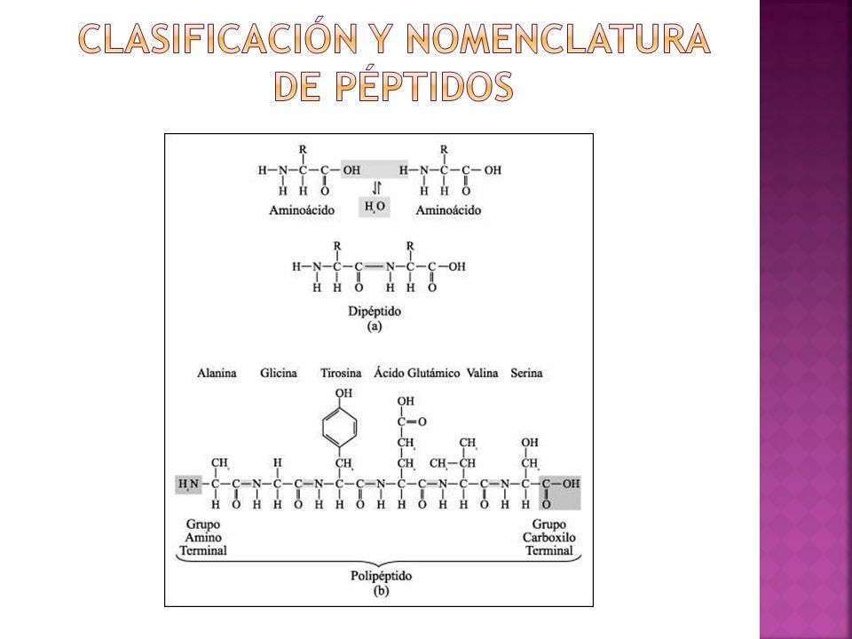 Clasificación y Nomenclatura de péptidos