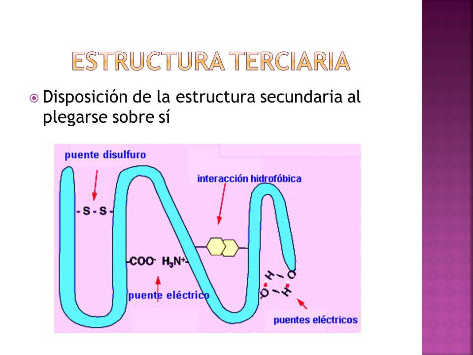 Estructura terciaria Disposición de la estructura secundaria al plegarse sobre sí