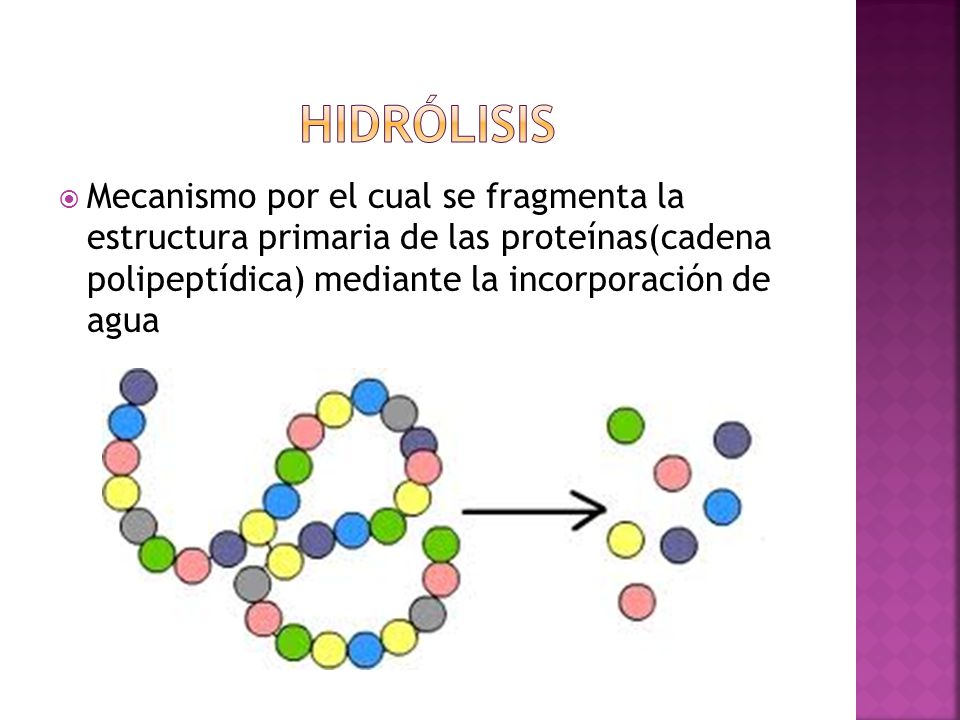 hidrólisis Mecanismo por el cual se fragmenta la estructura primaria de las proteínas(cadena polipeptídica) mediante la incorporación de agua.