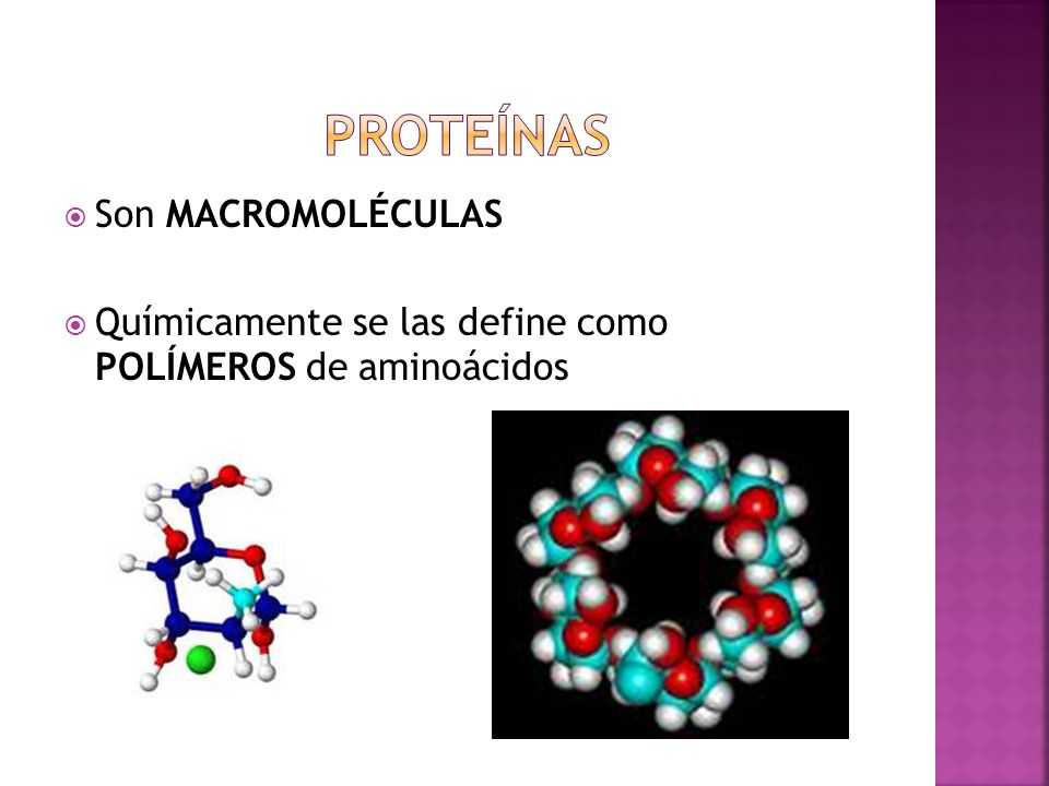 Proteínas Son MACROMOLÉCULAS