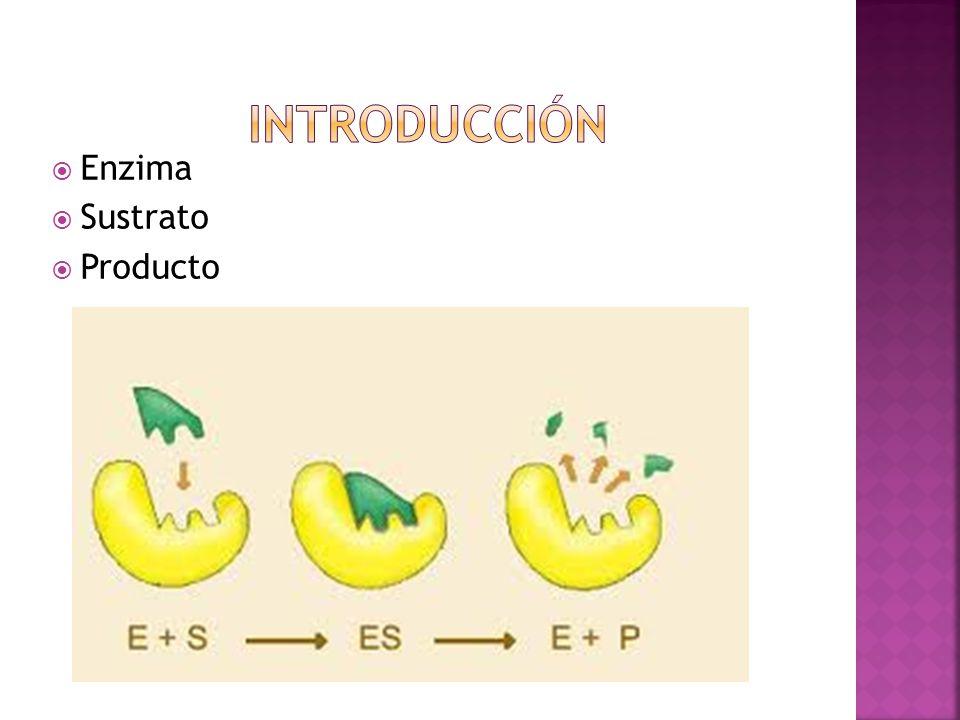 Introducción Enzima Sustrato Producto