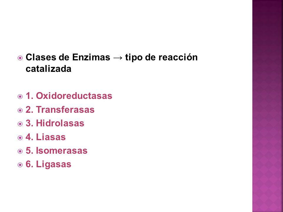 Clases de Enzimas → tipo de reacción catalizada