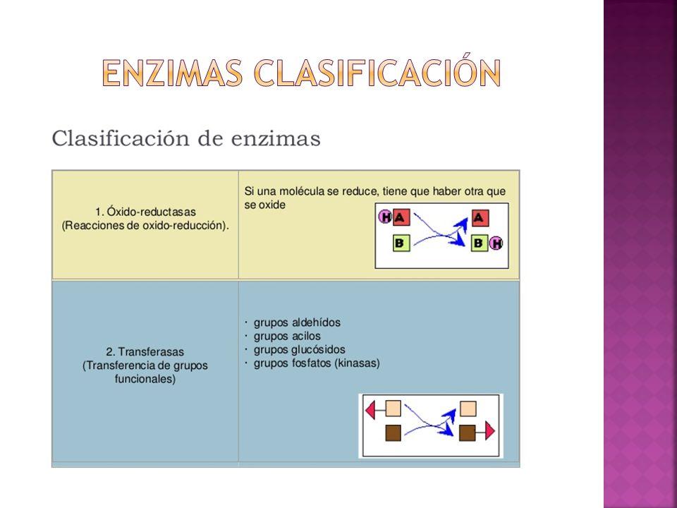 Enzimas clasificación
