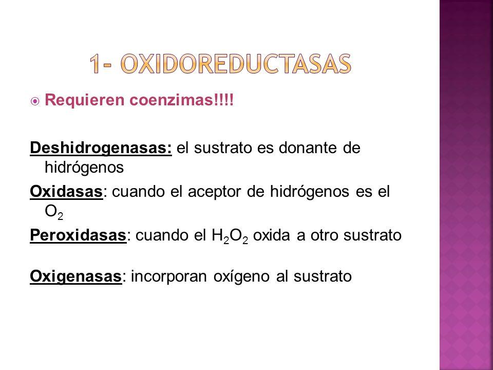 1- oxidoreductasas Requieren coenzimas!!!!