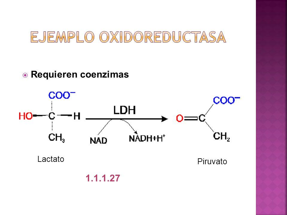 Ejemplo oxidoreductasa
