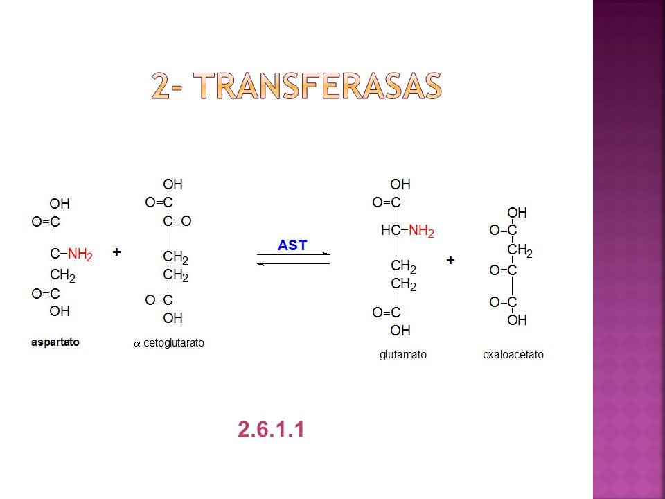 2- transferasas 2.6.1.1
