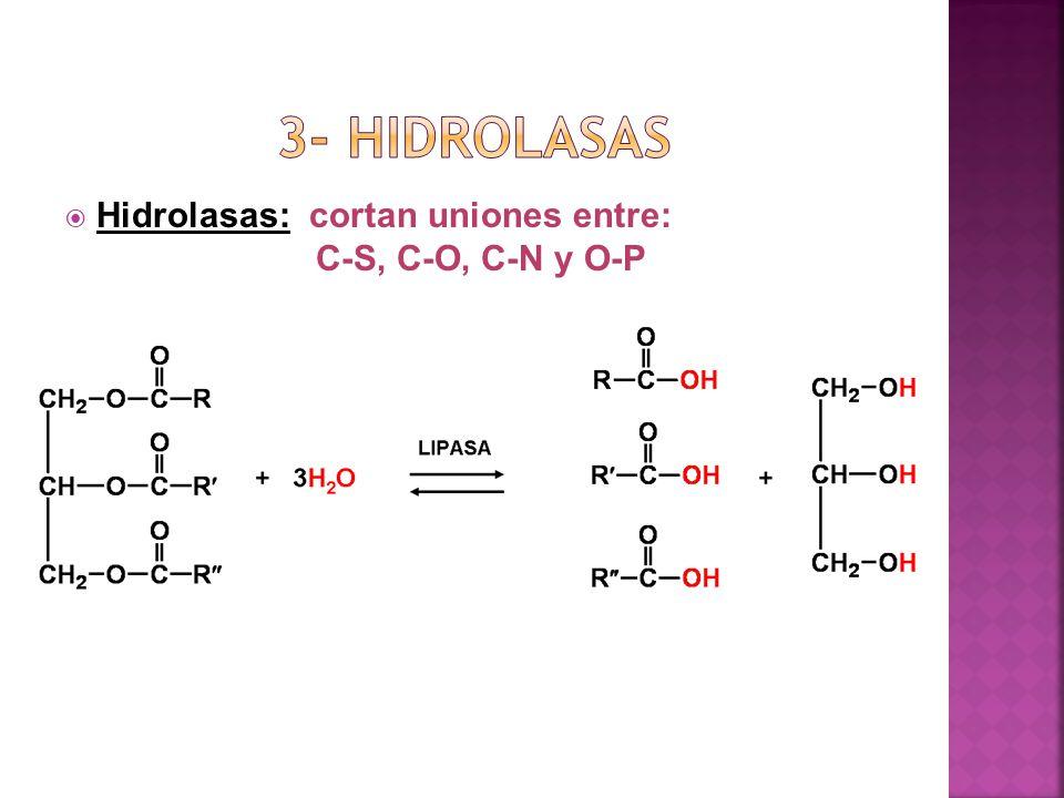 3- hidrolasas Hidrolasas: cortan uniones entre: C-S, C-O, C-N y O-P