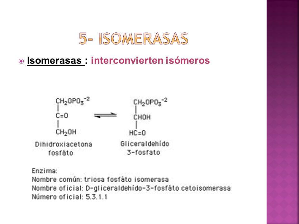 5- isomerasas Isomerasas : interconvierten isómeros