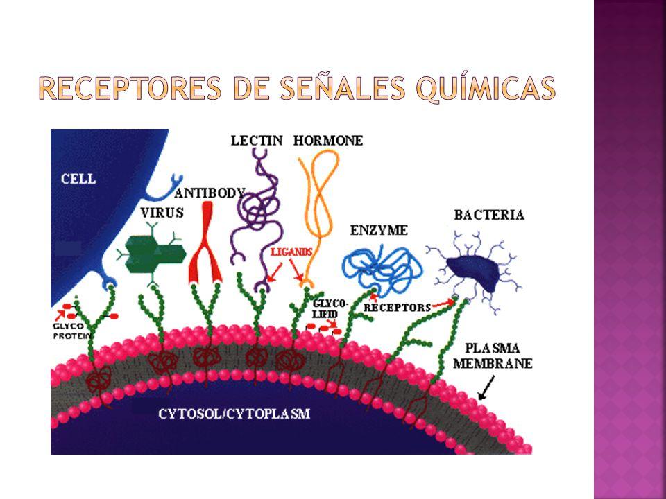 Receptores de señales químicas