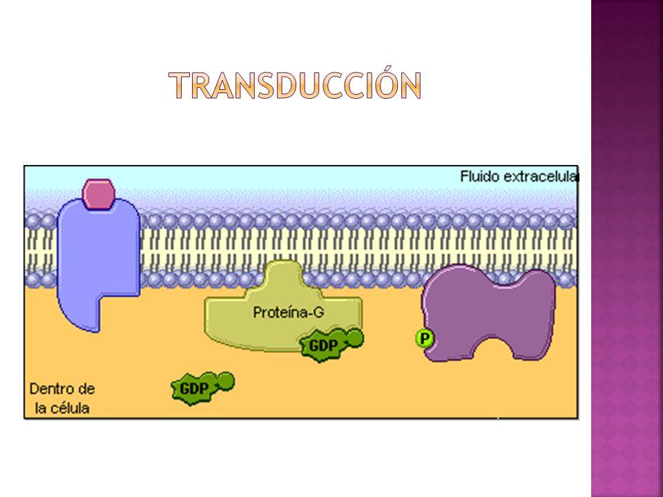 transducción