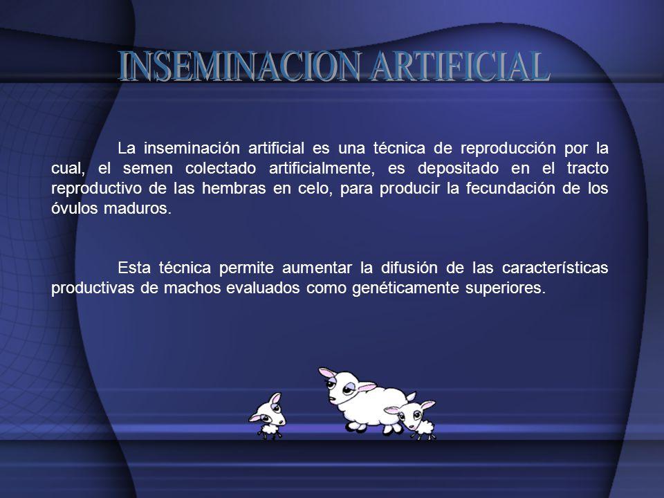 INSEMINACION ARTIFICIAL