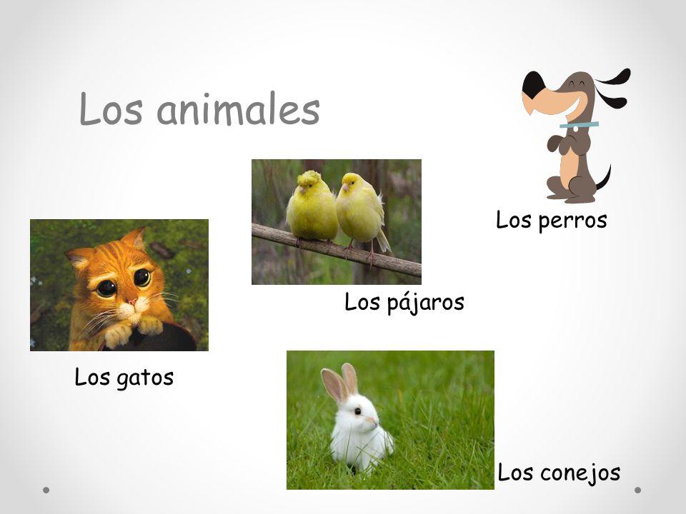 Los animales Los perros Los pájaros Los gatos Los conejos