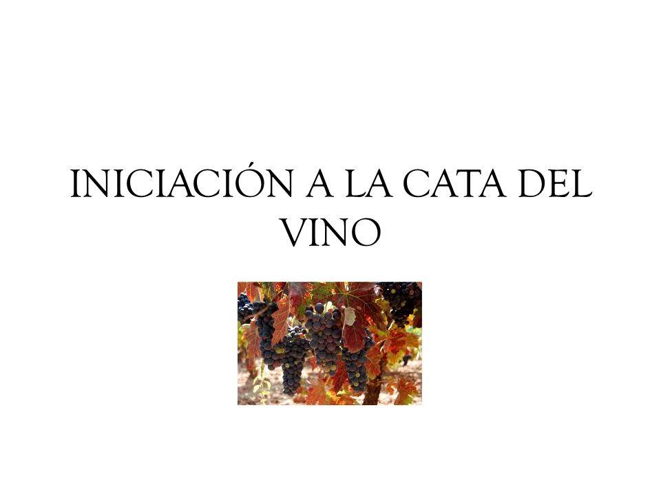 INICIACIÓN A LA CATA DEL VINO