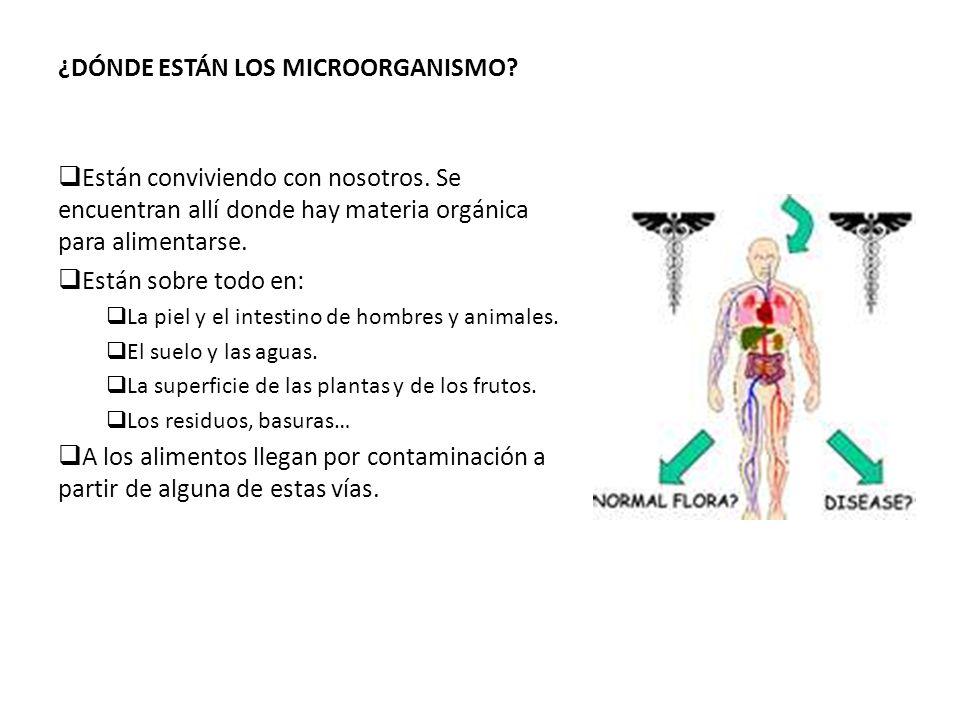 ¿DÓNDE ESTÁN LOS MICROORGANISMO