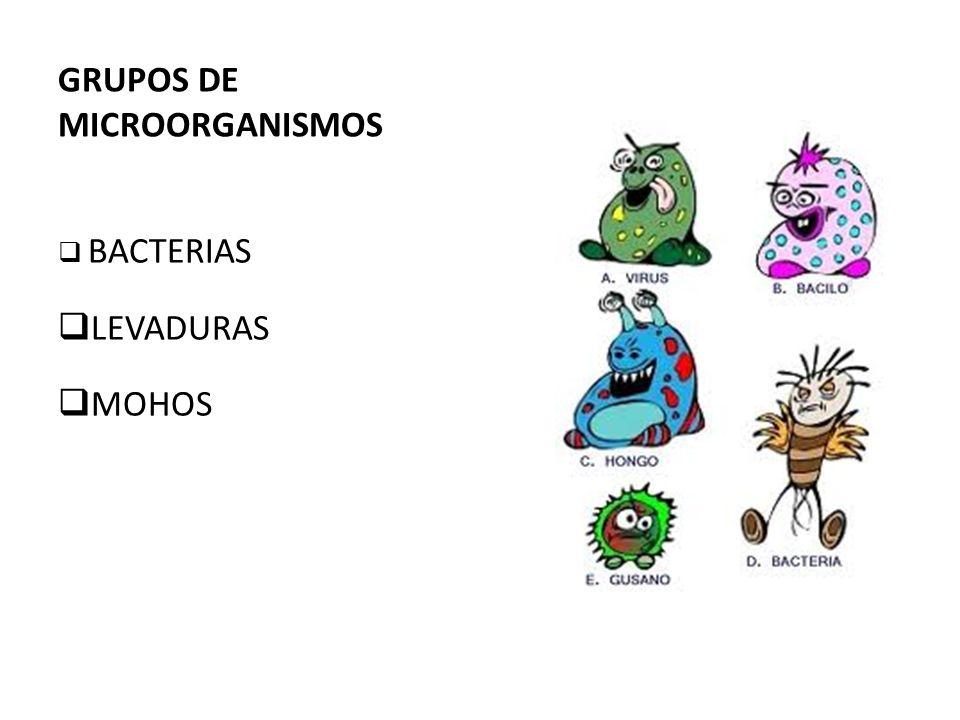 GRUPOS DE MICROORGANISMOS