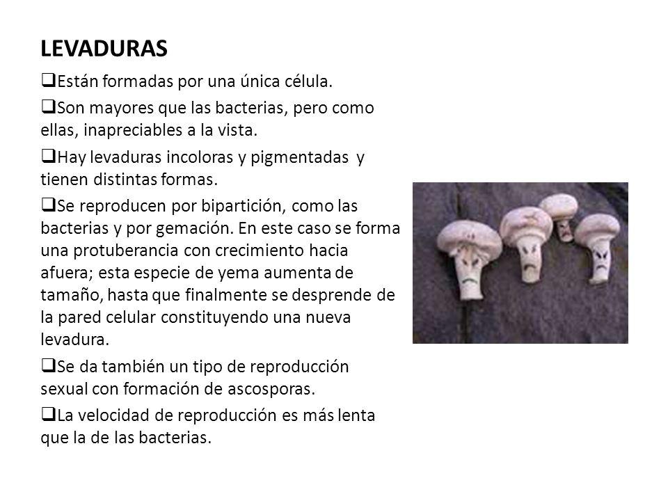 LEVADURAS Están formadas por una única célula.