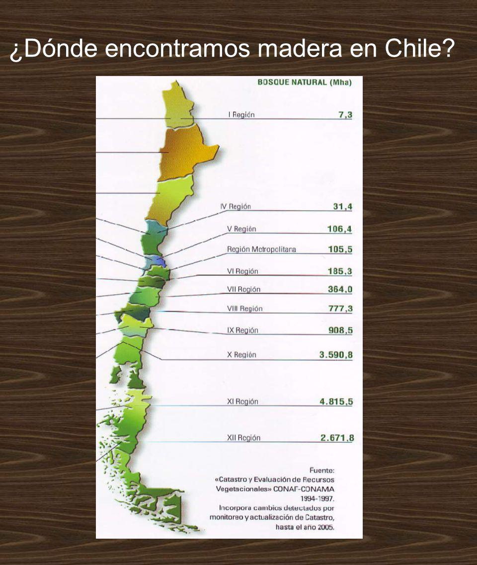 ¿Dónde encontramos madera en Chile