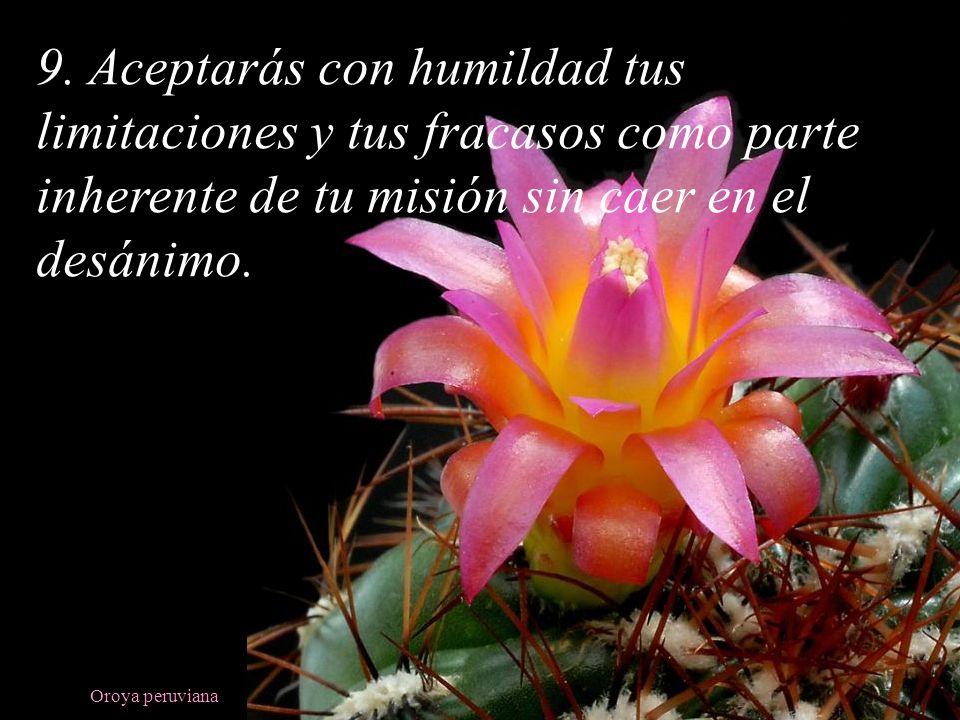 9. Aceptarás con humildad tus limitaciones y tus fracasos como parte inherente de tu misión sin caer en el desánimo.