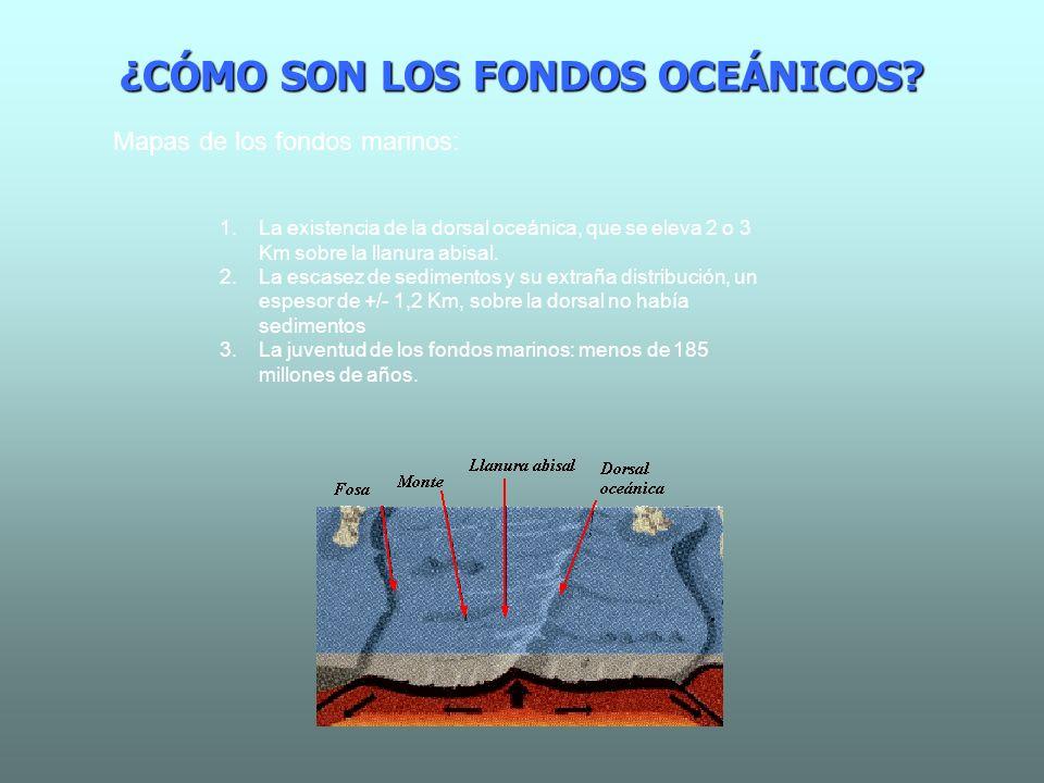 ¿CÓMO SON LOS FONDOS OCEÁNICOS