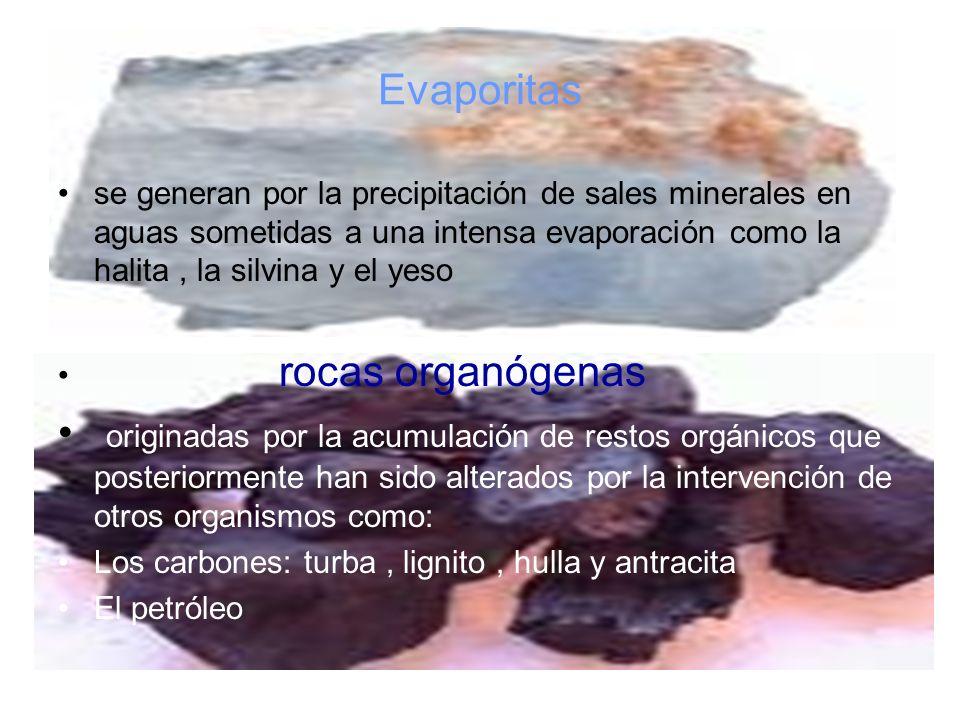 Evaporitas se generan por la precipitación de sales minerales en aguas sometidas a una intensa evaporación como la halita , la silvina y el yeso.
