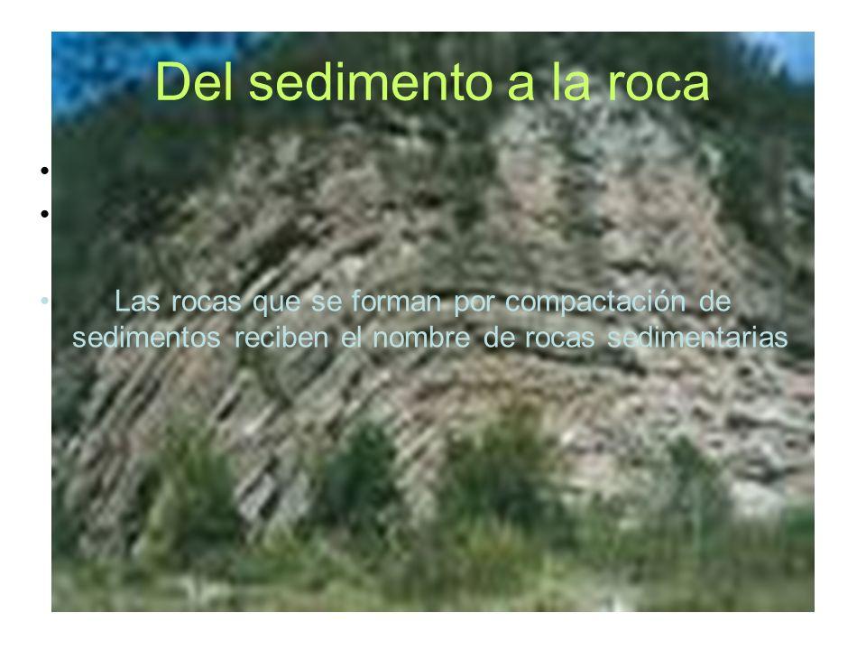Del sedimento a la roca Las rocas que se forman por compactación de sedimentos reciben el nombre de rocas sedimentarias.